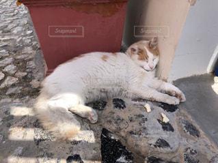 建物の上に横たわっている猫の写真・画像素材[3097448]
