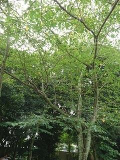 新緑の写真・画像素材[3158750]