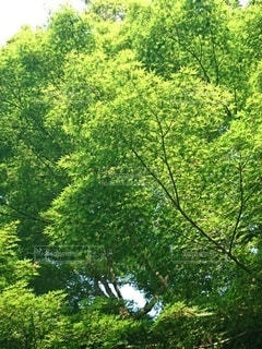 木のクローズアップの写真・画像素材[3158751]