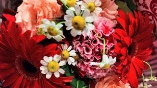 花のクローズアップの写真・画像素材[3108671]