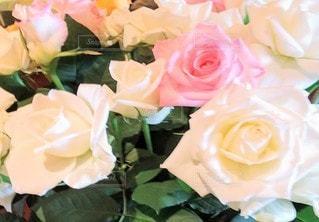 バラの花のクローズアップの写真・画像素材[3110346]