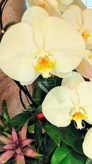 花のクローズアップの写真・画像素材[3110353]