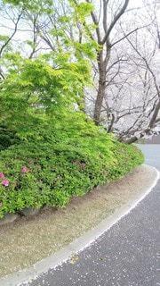 桜吹雪の後の写真・画像素材[3143890]