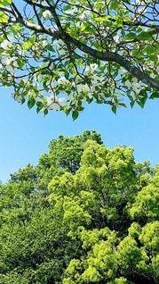 森の中の大きな木の写真・画像素材[3144706]