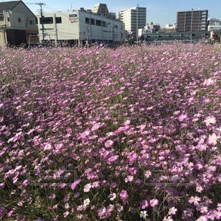 花の写真・画像素材[155427]