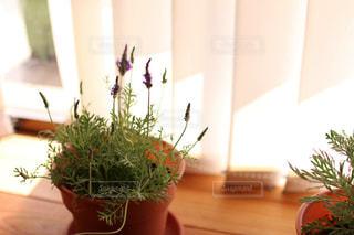 インテリア,緑,かわいい,鉢植え,観葉植物