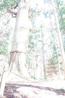 神聖な森の写真・画像素材[3113105]