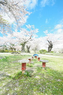 鶴岡公園の写真・画像素材[3117037]