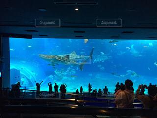 建物,沖縄,観光スポット,沖縄美ら海水族館