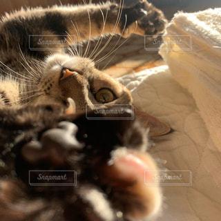 猫の伸びの写真・画像素材[3108773]