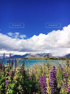 ルピナスと湖の写真・画像素材[3113519]