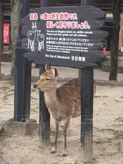 自己主張の強い鹿の写真・画像素材[3114640]