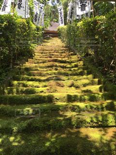 苔むす階段の写真・画像素材[3115396]