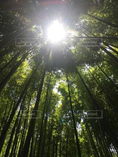 鎌倉の竹林の写真・画像素材[3115399]