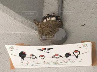 燕の雛の写真・画像素材[3115395]