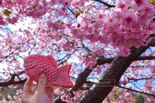 春のおめでたい焼きの写真・画像素材[3121408]