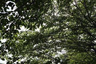 木々の写真・画像素材[4401127]