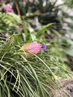 花のクローズアップの写真・画像素材[3571767]