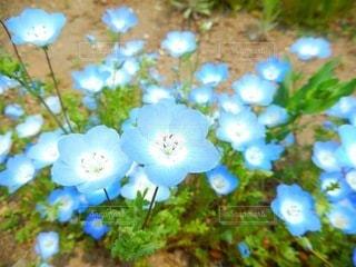 花のクローズアップの写真・画像素材[3571775]