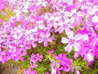 花のクローズアップの写真・画像素材[3571790]