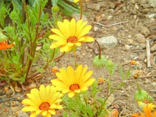 花のクローズアップの写真・画像素材[3571787]