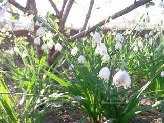 庭の植物の写真・画像素材[3571832]