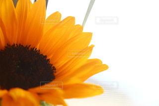 花のクローズアップの写真・画像素材[3454983]