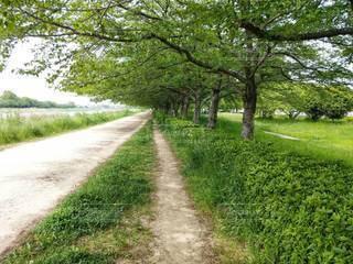 川沿いの緑の木々の写真・画像素材[3158944]