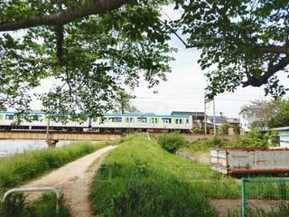 緑の中の列車の写真・画像素材[3158955]