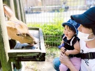 フェンスの前に立っている少女の写真・画像素材[3309019]