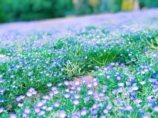 花園のクローズアップの写真・画像素材[3337818]
