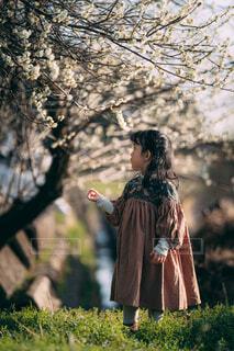 夕暮れの梅の写真・画像素材[4395932]