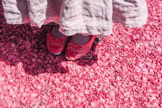 花びらのじゅうたんの写真・画像素材[4430911]