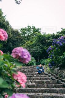 石段とあじさいの写真・画像素材[4616010]