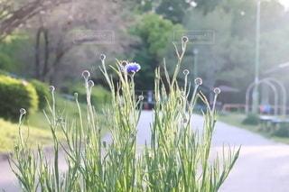 花畑のクローズアップの写真・画像素材[3142462]