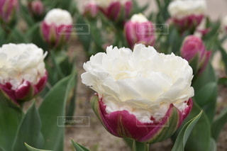 花のクローズアップの写真・画像素材[3579383]