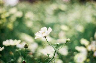花のクローズアップの写真・画像素材[3579448]