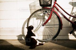 自転車と猫の写真・画像素材[4168874]