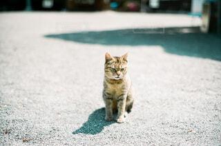 凛とした猫の写真・画像素材[4168875]