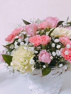 可愛いお花の写真・画像素材[4168899]