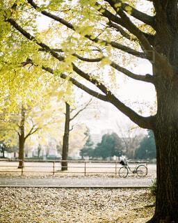 秋の公園の写真・画像素材[4302826]