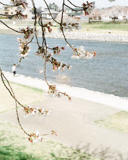川と桜の写真・画像素材[4321764]