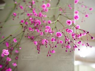 かすみ草の写真・画像素材[3137462]