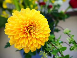花の写真・画像素材[3137466]