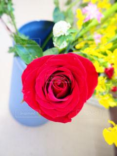 バラの花の写真・画像素材[3137468]
