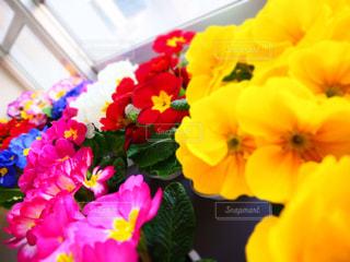 花のクローズアップの写真・画像素材[3137469]
