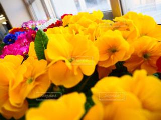 黄色い花の上に座っている花で満たされた花瓶の写真・画像素材[3137467]