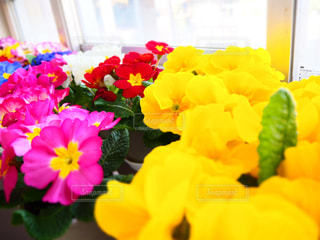 花のクローズアップの写真・画像素材[3137470]