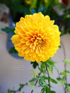 花のクローズアップの写真・画像素材[3137471]