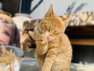 猫のクローズアップの写真・画像素材[3137502]